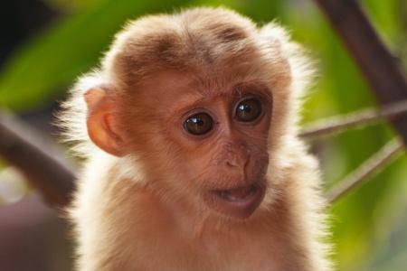 female nipple: Carino scimmia in natura