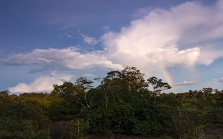 The rain forest in rainy have rainbow over sky photo