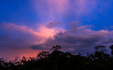 The sky on sunset time is colorful have forest Silhouettes in background photo
