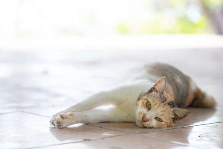 A cat lying on the floor