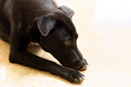 a black dog sitting on the floor of a white tile 写真素材