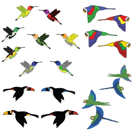 colorful birds  Ilustrace