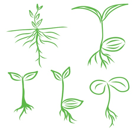 sprout seeding  Vector