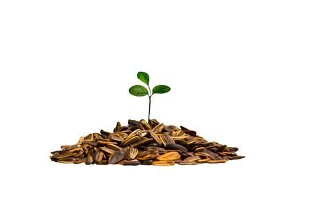 Young seedling growing Stock Photo - 16609952