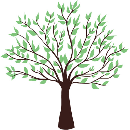 evergreen: green tree on white background