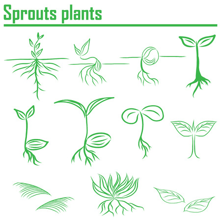seeding: Hand draw Sprouts plants seeding