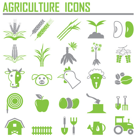 wheat isolated: agriculture icons