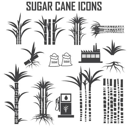 canne: Icone di canna da zucchero Vettoriali