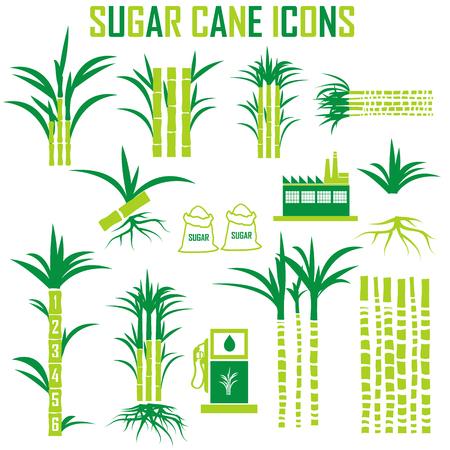 sugar cane farm: sugar cane icons vector.