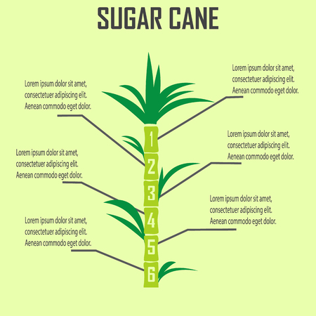 sugar cane Stock Illustratie