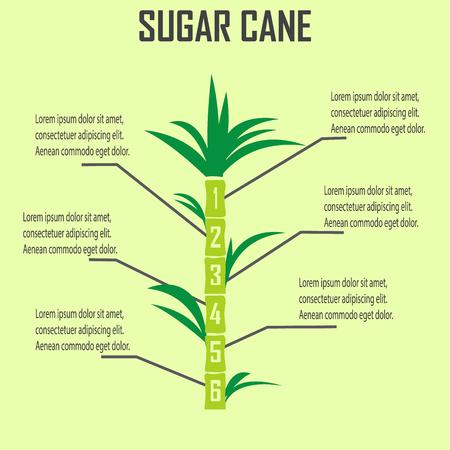 sugarcane: sugar cane Illustration
