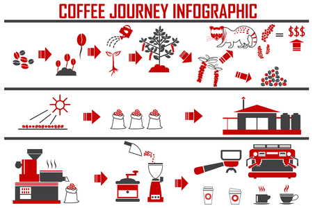Coffee infographic flat vector illustration. Preparation coffee beans.
