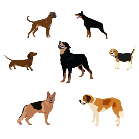 saint bernard: Dogs breed set with bull terrier boxer poodle isolated vector