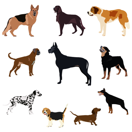 beagle terrier: Dogs breed set with bull terrier boxer poodle isolated vector