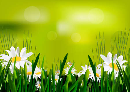 Spring background with chamomile flowers, green grass, blue sky. Can be used for Easter, birthday, wedding, anniversary, March 8, women's day. Seasonal sales