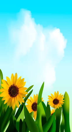 Spring background with sunflower flowers, green grass, blue sky