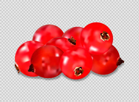 Ripe red cranberries with leaves. vector illustration on transparent background 向量圖像