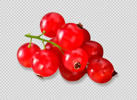 Ripe red cranberries with leaves. vector illustration on transparent background Stock fotó - 168027223