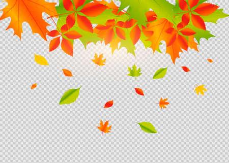 Autumn falling leaves isolated on white background. Autumn background with golden maple and oak leaves. Ilustração