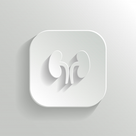 Kidneys icon - vector white app button with shadow Illustration