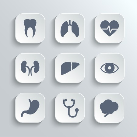 Medical icons set - vector white app buttons with heart stethoscope pulse tooth brain stomach lungs  liver kidney eye Vector