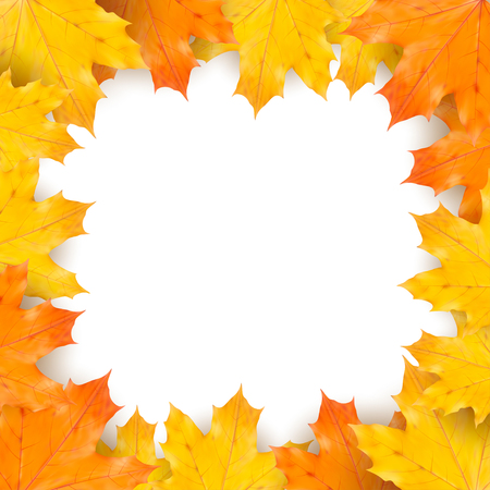 autumn leaves background: Autumn maple leaves on white background Illustration