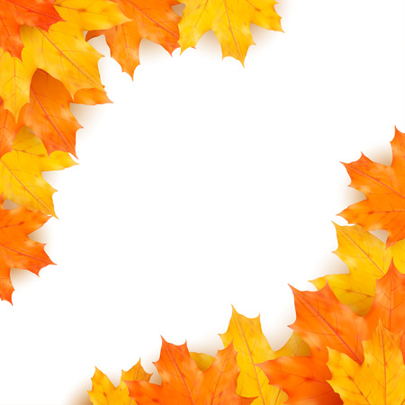golden border: Autumn vector background with realistic maples leaves isolated on white background Illustration