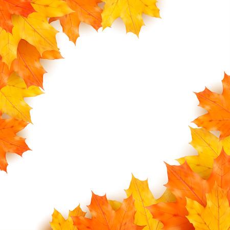 feuillage: Vecteur automne fond d'érables réalistes des feuilles isolées sur fond blanc