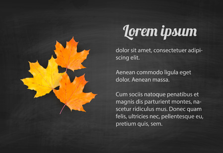 autumn: Autumn background with realistic autumn maple leaves on blackboard. Vector back to school chalkboard banner Illustration