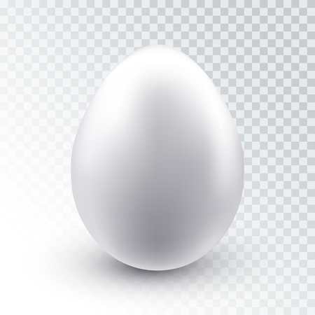 Vector realistic white chicken egg with shadow isolated on transparent background