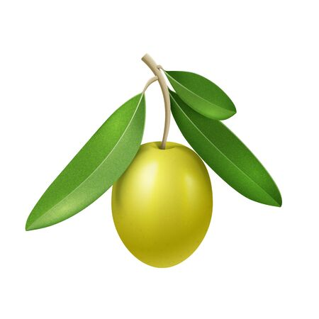 Vector realistic olive branch with green olive fruit