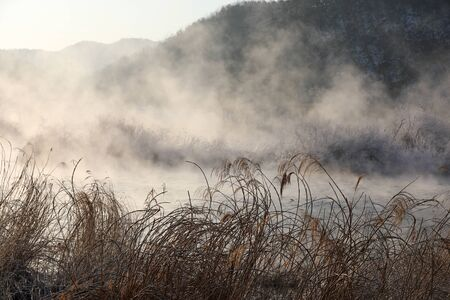 Misty winter morning with reeds and water. Chuncheon City, Korea