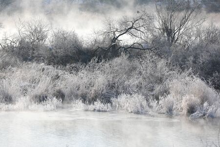 Trees and reeds are covered with snow, and the river has water mist. Soyang River, Chuncheon City, Korea 写真素材