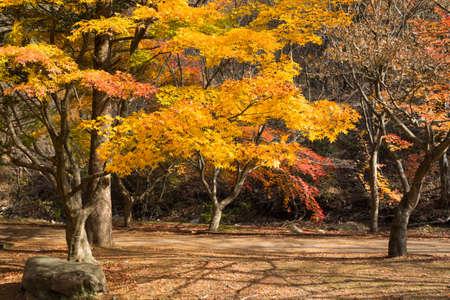 Autumn mountain and beautiful Korean temple roof landscape. Naejangsan National Park, South Korea.
