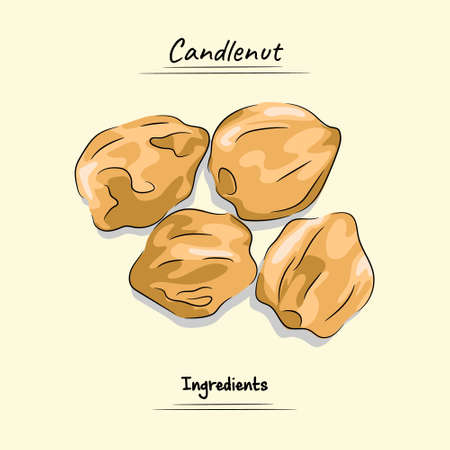 Candlenut Illustration Used For Ingredients Cooking, Sketch & Vector Style Ilustração