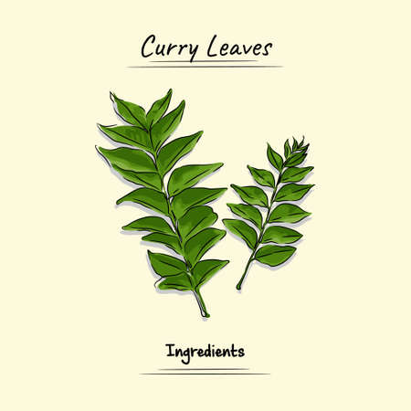 Curry Leaves Used Ingredients For Cooking Some Food, Sketch & Vector Style