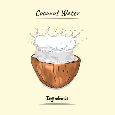 Coconut Water Illustration, Ingredients For Cooking Some Food, Sketch & Vector Style