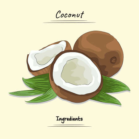 Coconut Illustration Used Ingredients For Cooking, Sketch & Vector Style