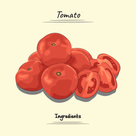 Tomato Illustration, Ingredients For Cooking Some Food, Sketch & Vector Style