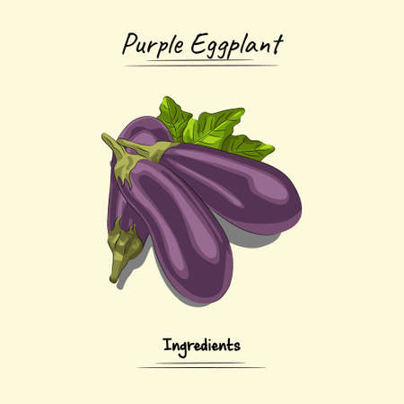 Purple Eggplant Illustration, Ingredients For Cooking Some Food, Sketch & Vector Style Isolated On Yellow Background