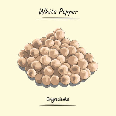 White Pepper Illustration, Ingredients For Cooking Some Food, Sketch & Vector Style Ilustração