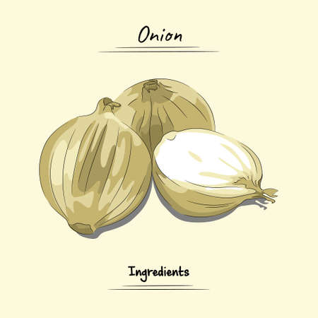 Onion Illustration, Ingredients For Cooking Some Food, Sketch & Vector Style Isolated On Yellow Background Ilustração