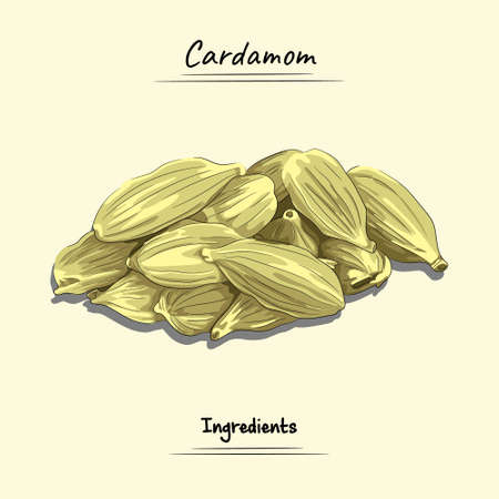 Cardamom Illustration, Ingredients For Cooking Some Food, Sketch & Vector Style Ilustração