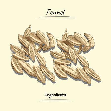 Fennel Illustration, Ingredients For Cooking Some Food, Sketch & Vector Style Ilustração