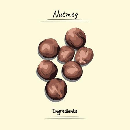 Nutmeg Illustration, Ingredients For Cooking Some Food, Sketch & Vector Style Imagens - 155563324