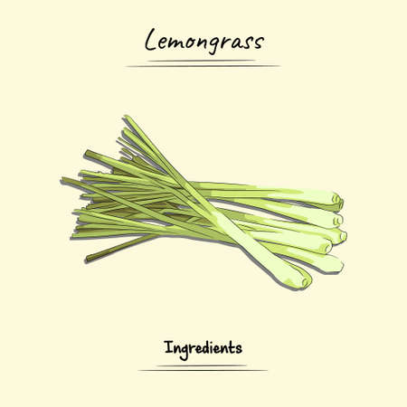Lemongrass Illustration Used Ingredients For Cooking Some Food, Sketch & Vector Style Ilustração