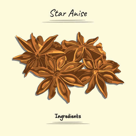 Star Anise Illustration Used Ingredients For Cooking Some Food, Sketch & Vector Style