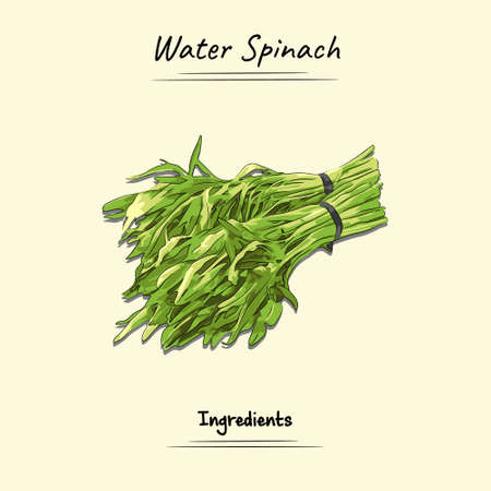 Illustration sketch and vector style of water spinach. Good to use for restaurant menu, Food recipe book and food ingredients content.