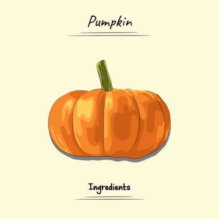Illustration sketch and vector style of pumpkin. Good to use for restaurant menu, Food recipe book and food ingredients content.