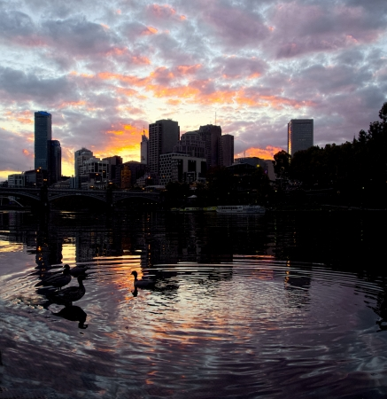 Ducks on the Yarra with a Colorful sunset in Melborune photo